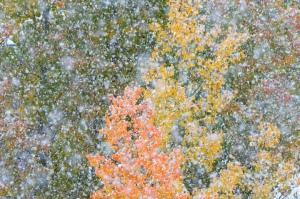 Fall_Scenes.10.14.13.005_720x478_72_RGB